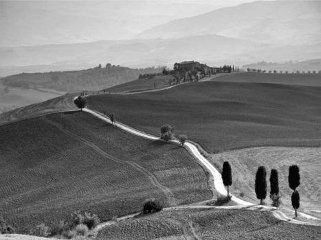 Gravel cycling in Tuscany is synonymous with roads lined with cypress trees